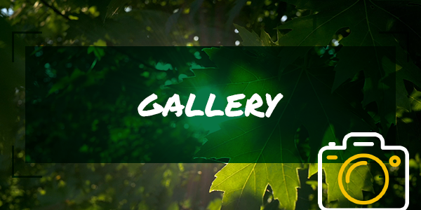 mobile-banners-gallery